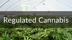 regulated cannabis market button